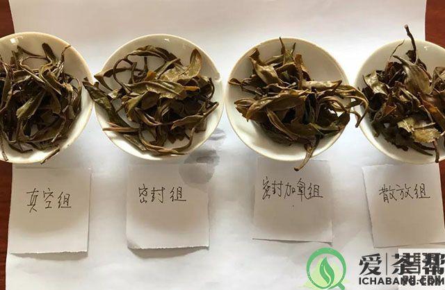 普洱茶叶底对比