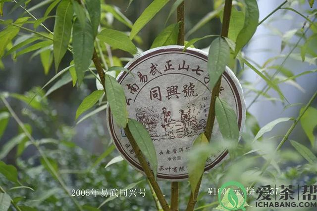 普洱中期茶展示