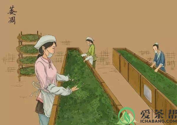 普洱茶生茶制作工艺(漫画图解)