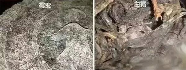 如何辨别普洱茶是长白霜还是霉变?什么是白霜和霉变?