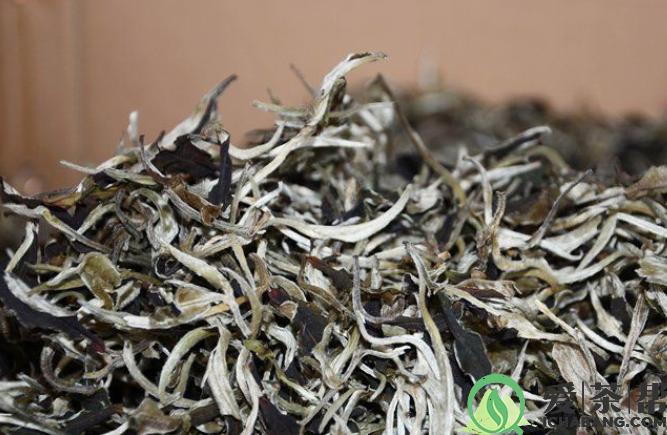 福鼎白牡丹茶的西汉传说