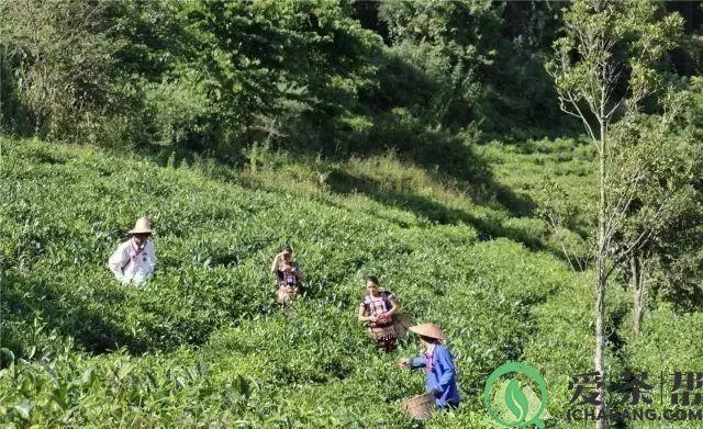 如何有的茶在保存的过程中需要存放于地下