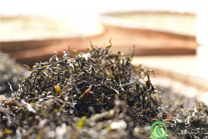 收藏普洱茶需要注意什么